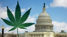 Survey: 11% of D.C. Area Government Employees Have Bought Legal Marijuana