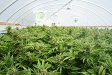 Here is the First Fortune 500 Marijuana Stock