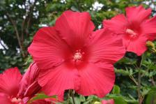 Police Arrest Elderly Couple for Hibiscus Plant Mistaken for Marijuana, Couple Sues