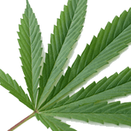 Hemp Processing Plant Receives State Funding in New York, First in U.S. to Receive Government Assistance