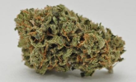 The 10 Marijuana Strains Everyone is Smoking