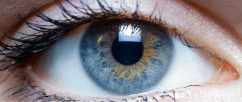 Study: Topical Cannabinoids Reduce Corneal Hyperalgesia and Inflammation