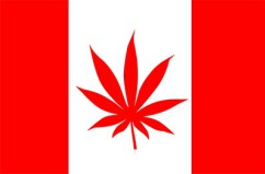 Canada Senate Votes to Legalize Marijuana for Those 18+