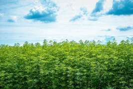 Kentucky Legislature Passes Resolution Urging Federal Government to End Hemp Prohibition