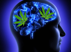 Study: Cannabinoids May Alleviate Dystonia and Other Huntington's Disease Symptoms