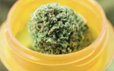 New Jersey Adds Five New Medical Marijuana Conditions, Reduces Patient Fee