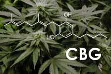Study: Cannabigerol May Treat Neuroinflammation and Oxidative Stress