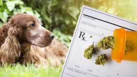 California: Medical Cannabis for Pets Bill Passed by Assembly, Advances in Senate