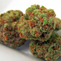 The 10 Most Popular Ways to Consume Marijuana