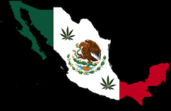 Mexico Supreme Court Rules Marijuana Prohibition is Unconstitutional