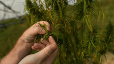 Hemp Is Finally About To Go Fully Legit In The U.S.