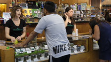 California Pot Taxes Lag As Illegal Market Flourishes