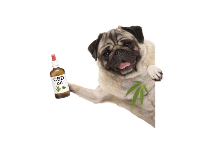 Hemp-CBD Pet Foods Are Everywhere But Are They Legal?